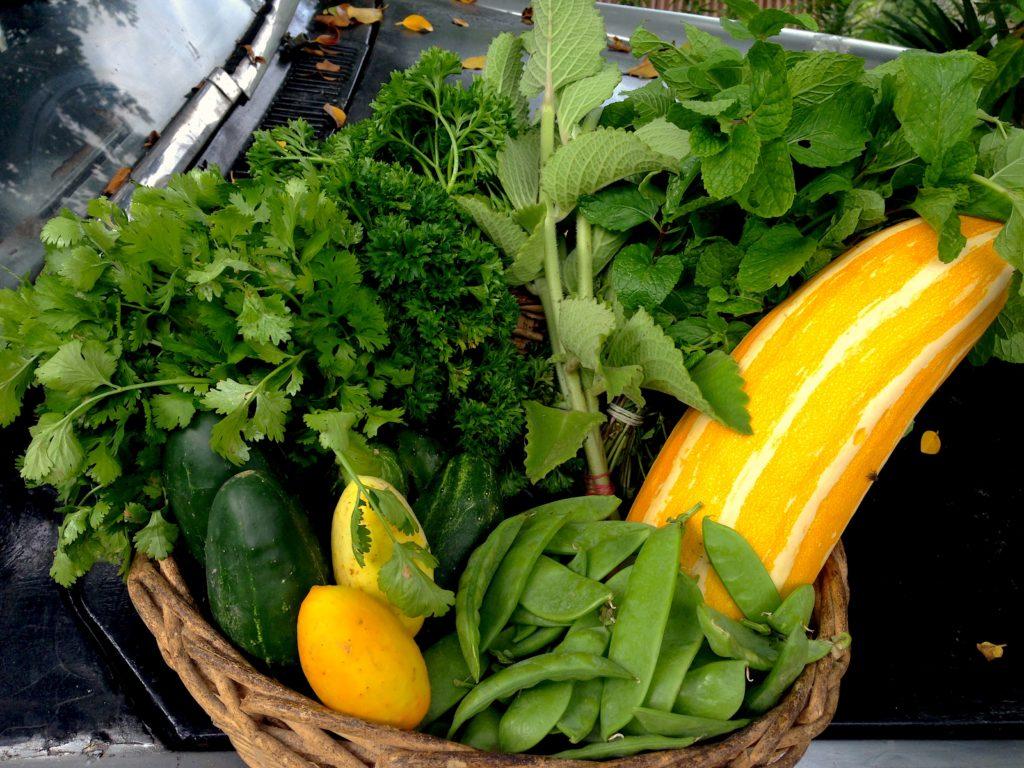 Basket of Veggies on Car - Farm in Jamaica
