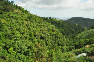 Jamaica Mount Edge Guest House