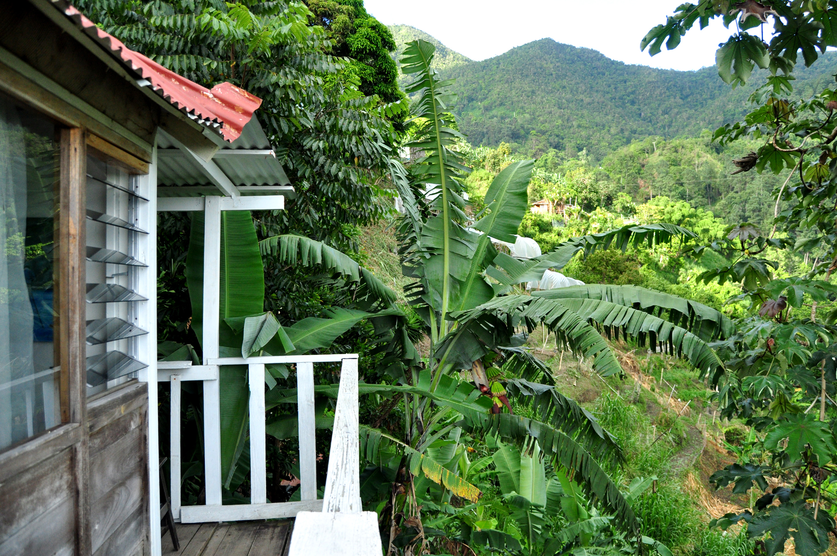 Jamaica Mount Edge Guest House Roost Room